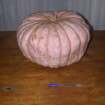 Courge Candy Roaster