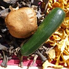 Courgette noir verte maraichère