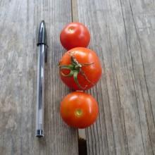 Tomate rouge Miel du Mexique