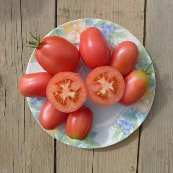 Tomate prune